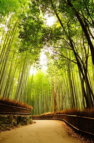 Une forêt de bambous, rien de mieux pour se relaxer et avoir confiance en soi. Vous le voyez Zidane?