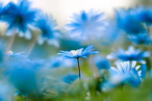 Elles sont pas jolies ces petites fleurs bleues?