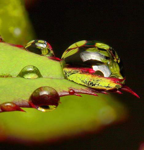Bénissons les perles de pluie
