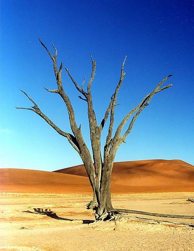 L'arbre des possibles ?