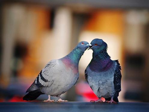 C'est le grand amour...