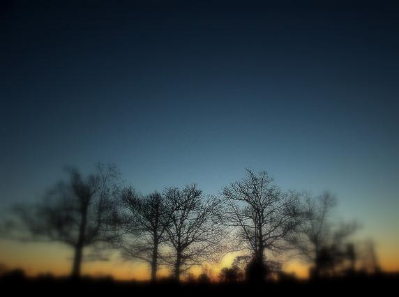 Cinque arbores